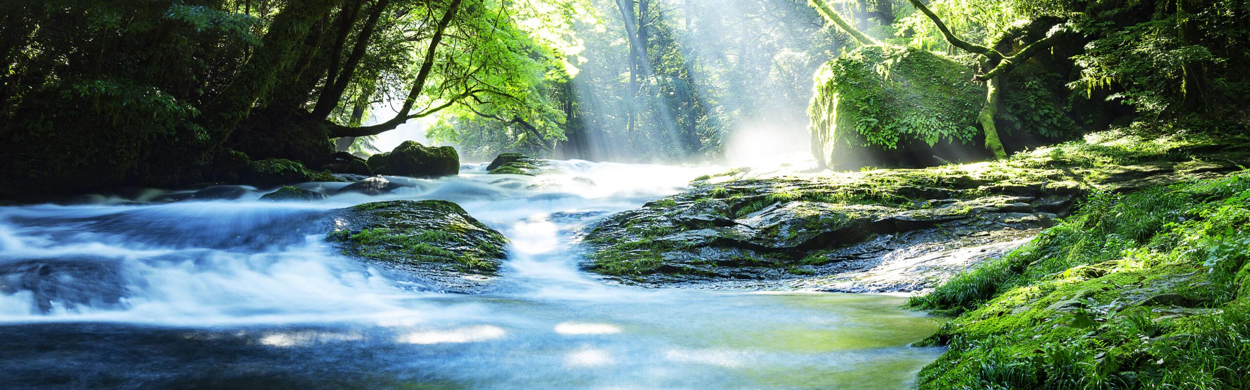 A clean river flows through a vibrant, green forest
